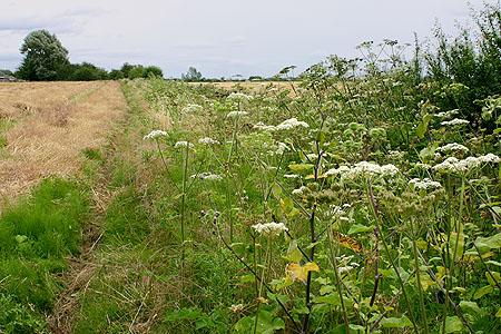 Trackbed west of Lechlade